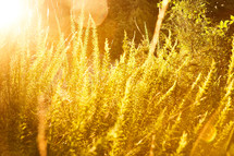tall brush under intense sunlight
