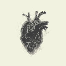 anatomical heart illustration.