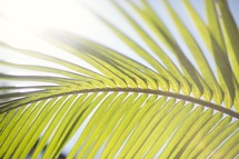 palm frond closeup
