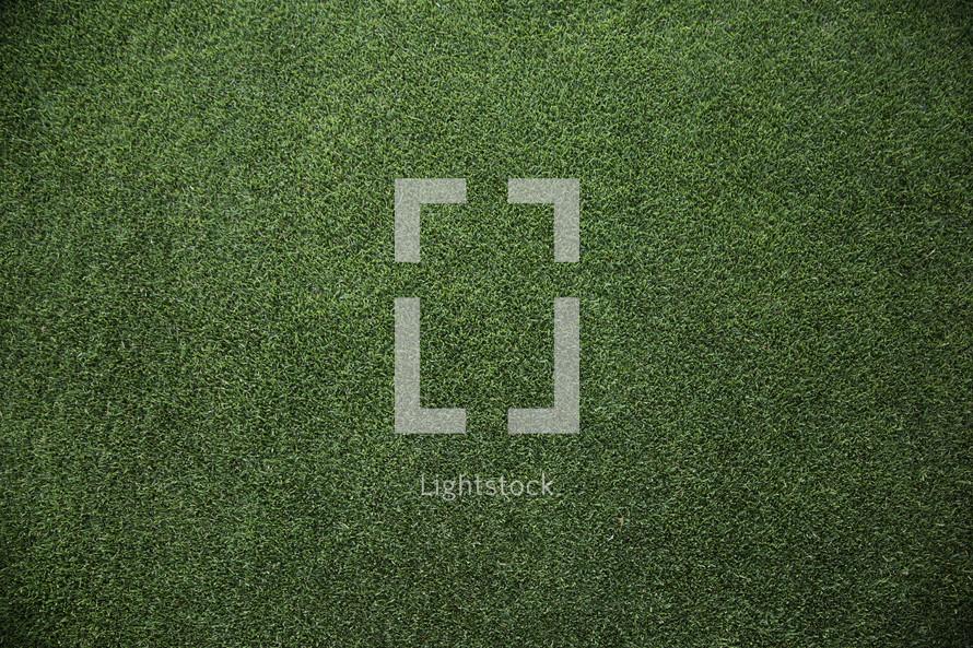fairway grass from a golf course.