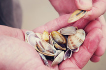 Hands holding muscle and clam shells.