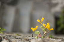 flowers emerging through a rock wall