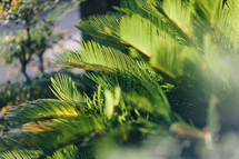 palm fronds outdoors