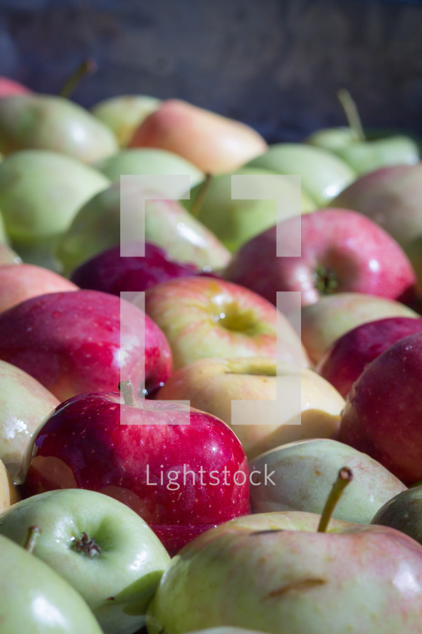 pile of red and green apples