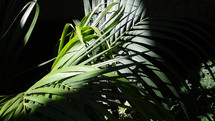 Sunlight lights up a Palm frond from a forest floor showing beautiful green tropical palm fronds illuminating the earth with life.