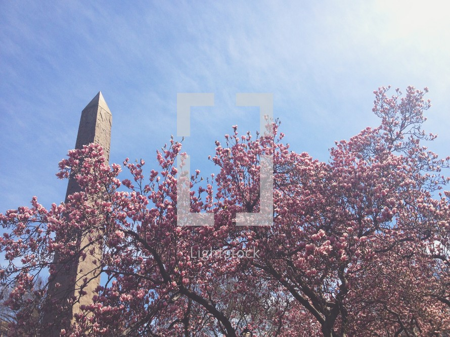 Washington Monument and pink spring blossoms