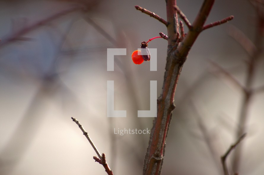red berry and branch