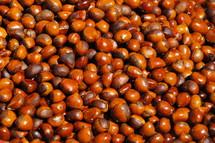 Acorn nuts. Autumn, fall, food, oak, brown.