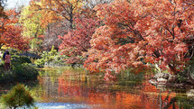 red fall trees over a pond
