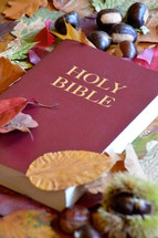 bible between colorful autumn leaves. 