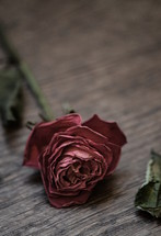 Withered rose.