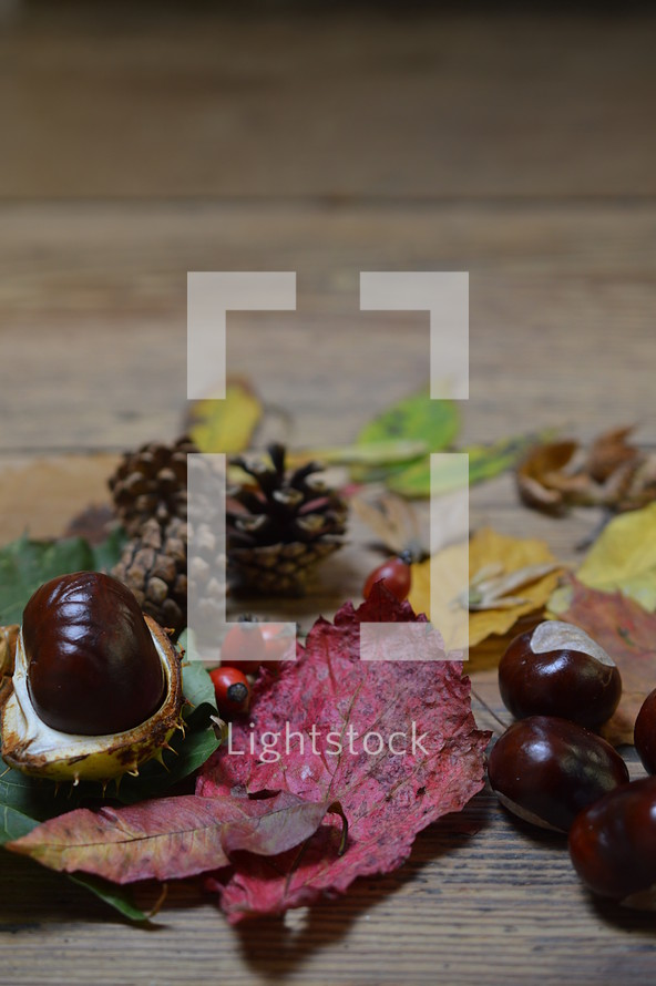 collection of fall nature items