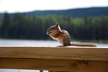 chipmunk on a deck railing