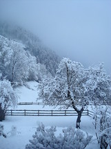 wintry mountain scene with snow covered trees.  winter, fun, snow, holidays, vacation, sport, free time, mountain, skier, ski, skiing, cold, cool, away, adventure, joy, pleasure, delight, enjoy, tree, trees, covered, cover, enjoyment, glacier, ice, blue, sunshine, light, frost, freeze, shiny, radiant, glossy, sparkling, brilliant, bright, gleaming, frozen, nature, quiet, silent, calm, sleeping nature, outdoor, outdoors, mute, noiseless, lonely, peaceful, tranquil, waiting, mountain, hill, chilly, frosty, countryside, scenery, landscape, season, December, January, February, wintertime, wintertide, time, iced, fog, mist, cloud, cloudy, morning, morning light, early