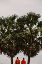 Buddhist monks below palm trees