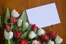 red and white tulips, gift