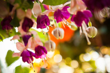 pink and fuchsia flowers