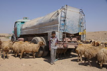 Shepherd boy, sheep, and a water truck in the desert