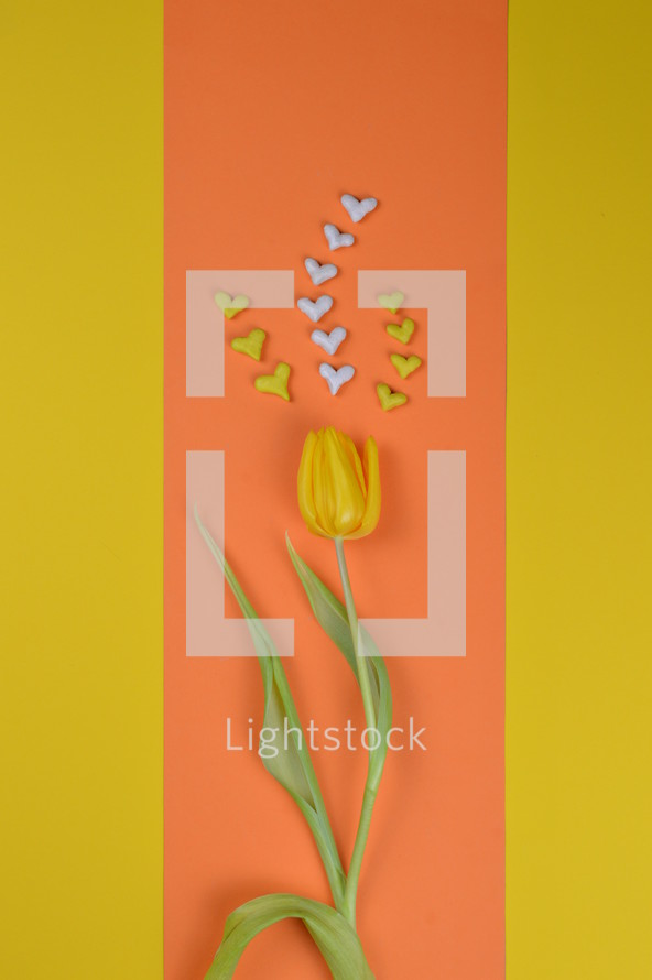 yellow tulip with hearts