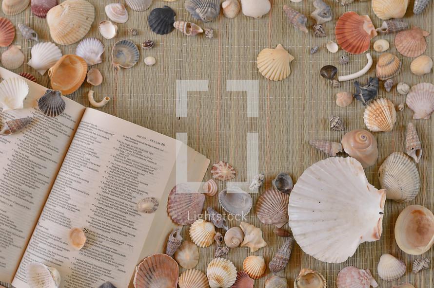 seashells and open Bible on mat