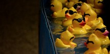 rubber duckies in water