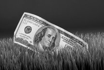 a one hundred dollar bill in grass