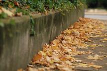 Fall leaves on the sidewalk.