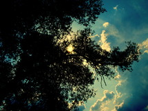 tree branches and clouds in the sky