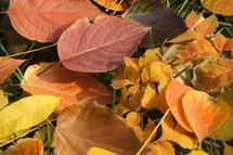 Fall leaves on the ground. Autumn, orange, season