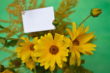 yellow Helianthus maximiliani and a blank piece of white paper