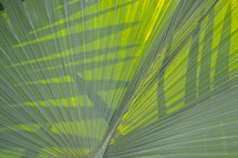 Palm tree fronds or branches