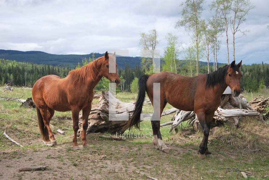 horses on a mountainside