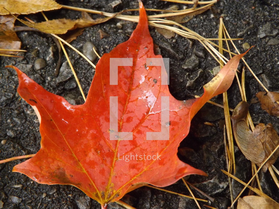 Autumn leaf on the ground.