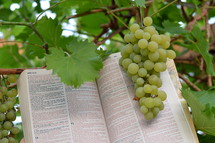Vine grapes with open bible