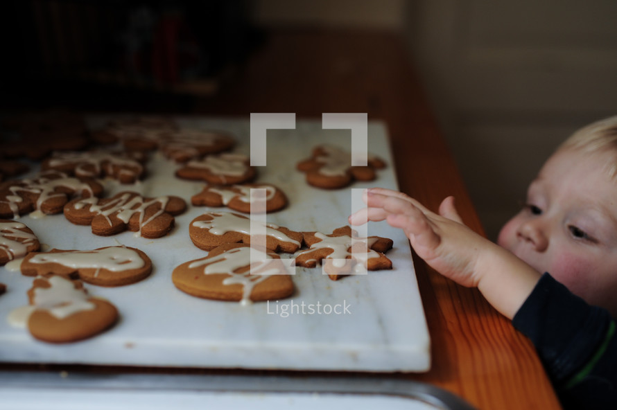 a toddler licking icing off Christmas cookies