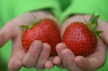 offering huge strawberries