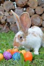 rabbit near Easter eggs