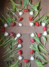white and red tulips forming the shape of a cross