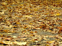 Autumn leaves on the ground.