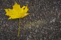 fall leaf on asphalt
