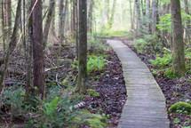 wooden boardwalk path through the woods