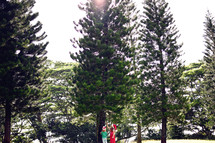 kids looking up at a giant pine tree