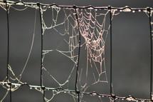Dew Laden Webs on Fence Line