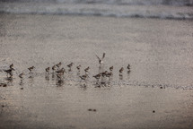 Ocean birds in the water at the shoreline.