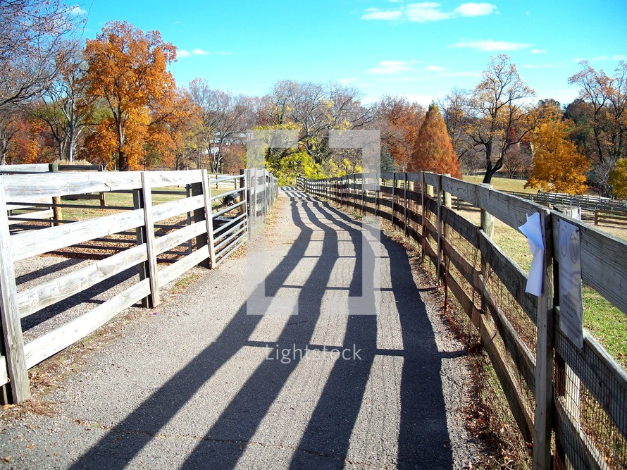 Fence-lined path with shadow and fall foliage.