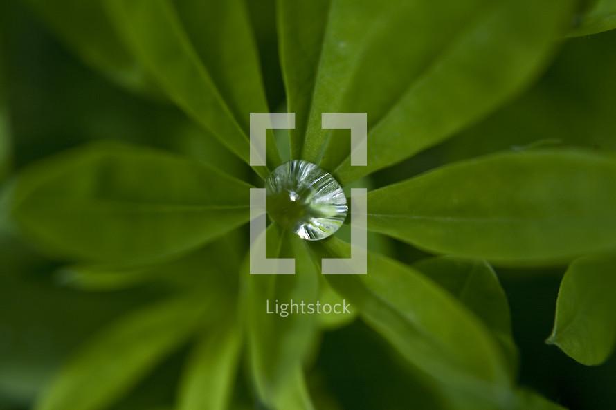 pooled rain water in a leaf