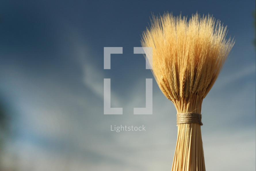 Bundle of wheat.