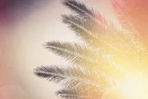 sunlight on a palm