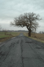 isolated tree along a crumbling rural road