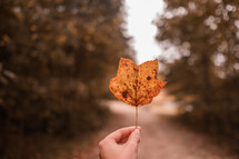 hand holding up a fall leaf
